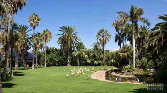 Teneryfa - Loro Park