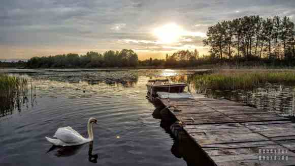 Jezioro Piniewo - Folwark Karczemka