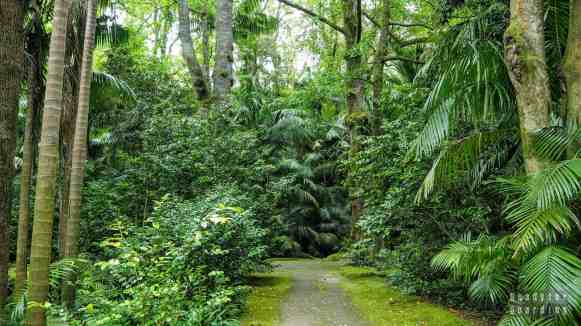 Parque Terra Nostra, Furnas - Azory