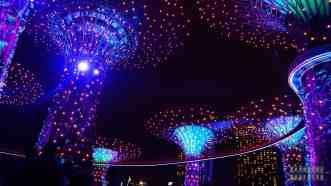 Nocny pokaz w Supertree Grove, Gardens by the Bay - Singapur