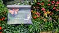 Ogród z motylami - Lotnisko Singapur-Changi