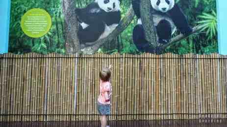 River Safari, Zoo Singapur