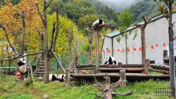 Wolong China Giant Panda Garden