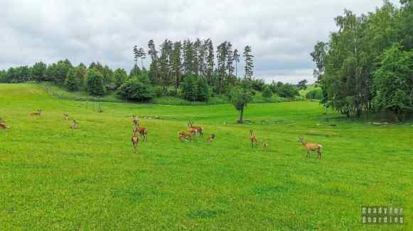 Zoo Safari, Okrągłe - Mazury