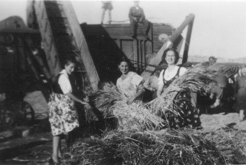 le donne che raccolgono il fieno