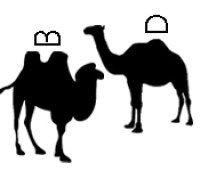 camels - use mnemonics to tell the difference