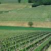Burgundy On A Plate-Wine & Gastronomy in Burgundy Burgundy vineyard
