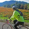 Road Bike Tours in California — UDCTOURS Wine Country Cycling