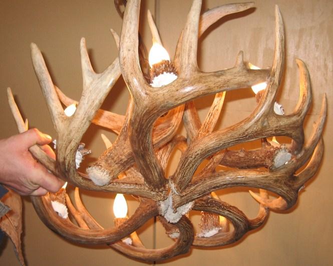 Peak Round Whitetail Deer Antler Chandelier 8 Light