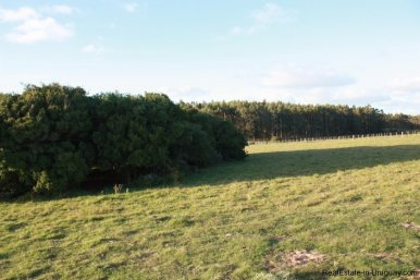 247-025-Small-Countryside-Farm-for-Rent