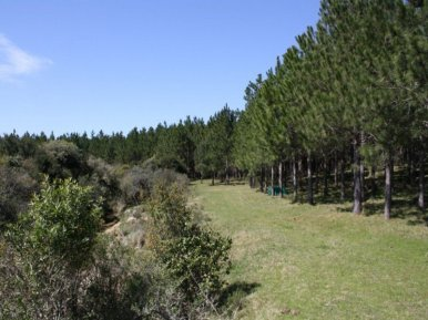 4636-land-of-new-chacra-near-garzon