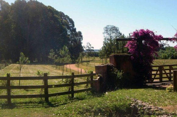 4054-Farmhouses-in-the-Most-Prestigious-Area-of-Punta-del-Este-by-El-Quijote-National-Park-1856