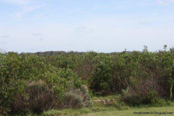 4514-Plot-of-Land-in-Santa-Monica-just-minutes-before-Jose-Ignacio-2137
