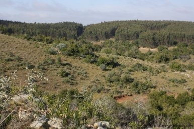 4590-50-Hectare-Field-in-the-Sierra-Hills-by-Garzon-1883