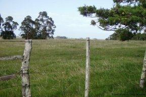 4795-Incredible-Campo-Land-in-Elevated-Area-in-Rinco-del-Anastasio-near-Jose-Ignacio-1834