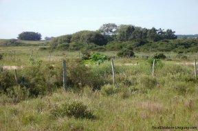 4795-Incredible-Campo-Land-in-Elevated-Area-in-Rinco-del-Anastasio-near-Jose-Ignacio-1837