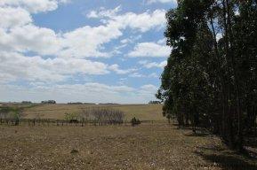 4797-Attractive-Ranch-Land-with-small-School-close-to-Jose-Ignacio-1750
