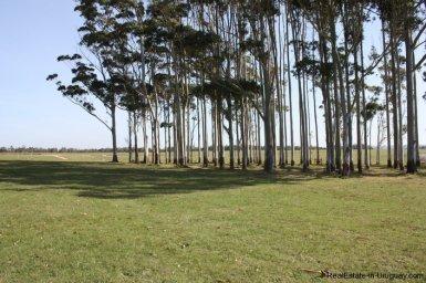 4482-Plots-in-Pueblomio-Development-with-Countryside-Views-and-La-Barra-Golf-Club-2235