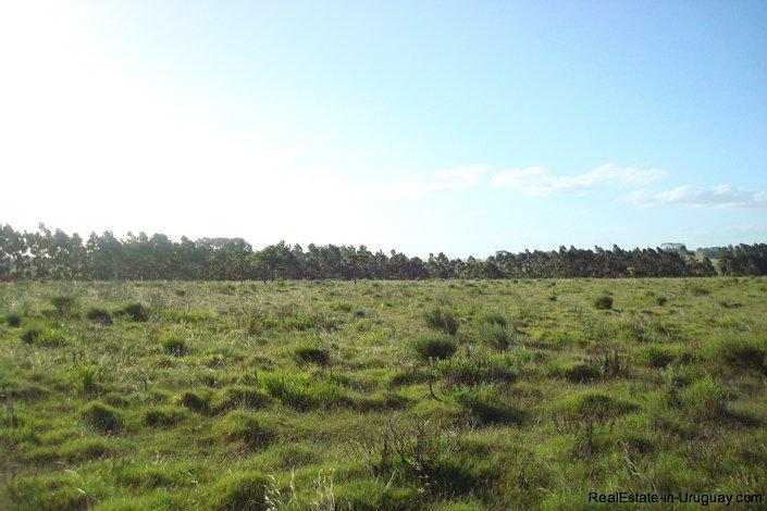 3990-Magnificent-Land-with-Lagoon-Views-close-to-Jose-Ignacio-2483