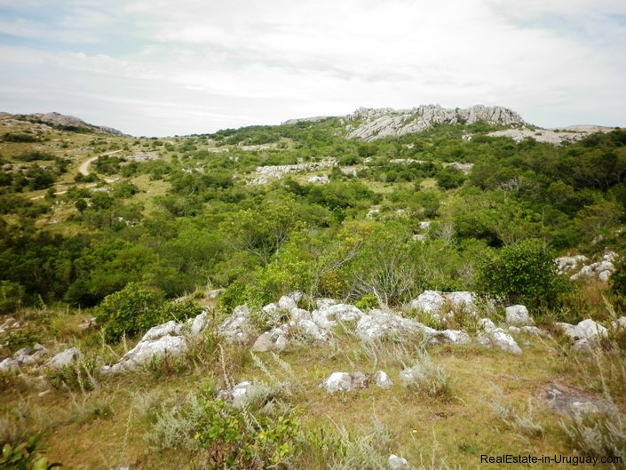 5151-La-Canas-Mountain-Land-with-Good-Quality-Soil-2671