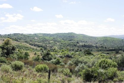5151-La-Canas-Mountain-Land-with-Good-Quality-Soil-2672