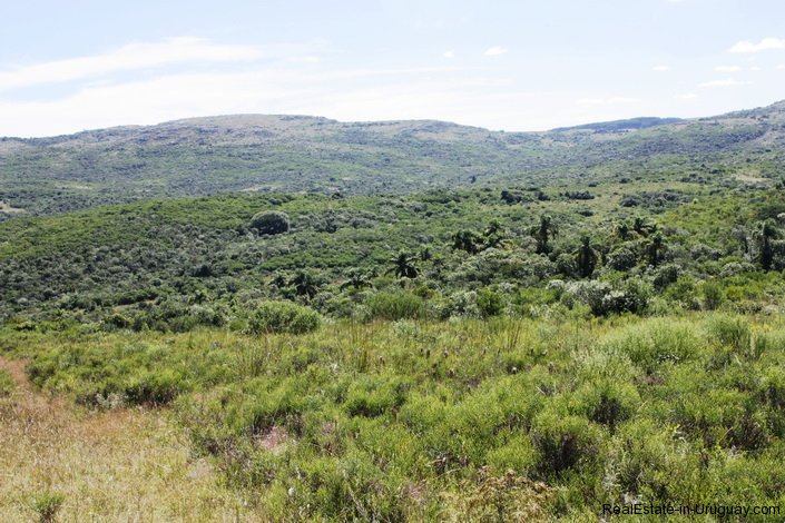 5151-La-Canas-Mountain-Land-with-Good-Quality-Soil-2679