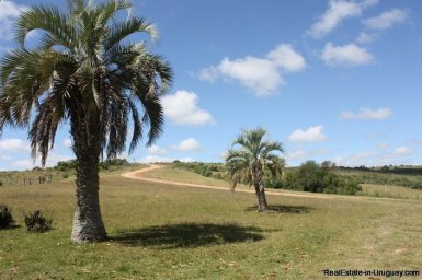 5153-Agroland-with-Ranch-in-the-Las-Canas-Mountain-Area-2715