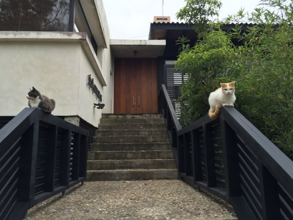 Entrance with cats