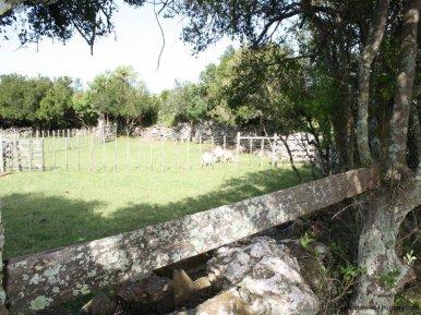 5538-Little-Posada-on-100-Hectare-Land-in-Minas-4394