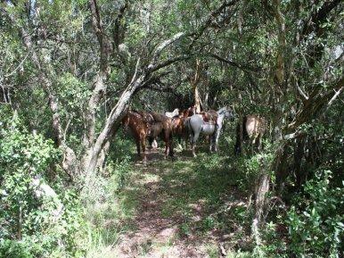 5538-Little-Posada-on-100-Hectare-Land-in-Minas-4396