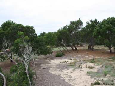 5570-Land-in-Laguna-Escondida-Jose-Ignacio-4454