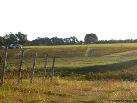 1416-Winery-on-89-ha-close-to-Carrasco-Montevideo-4678