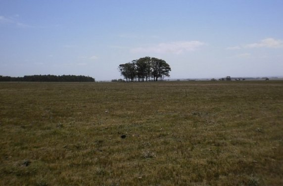 5218-Fields-of-35Ha-Land-close-to-Las-Garzas-Rocha