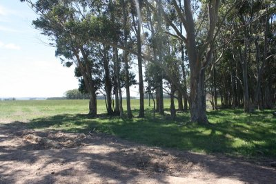 5218-Trees-on-35Ha-Land-close-to-Las-Garzas-Rocha