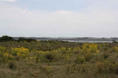 5218-Views-of-35Ha-Land-close-to-Las-Garzas-Rocha