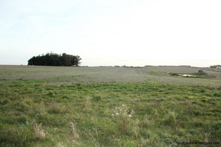 5603-Agro-Field-San-Jacinto-near-Montevideo
