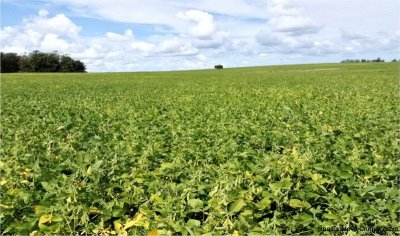 5603-Crops-of-Agro-Field-San-Jacinto-near-Montevideo