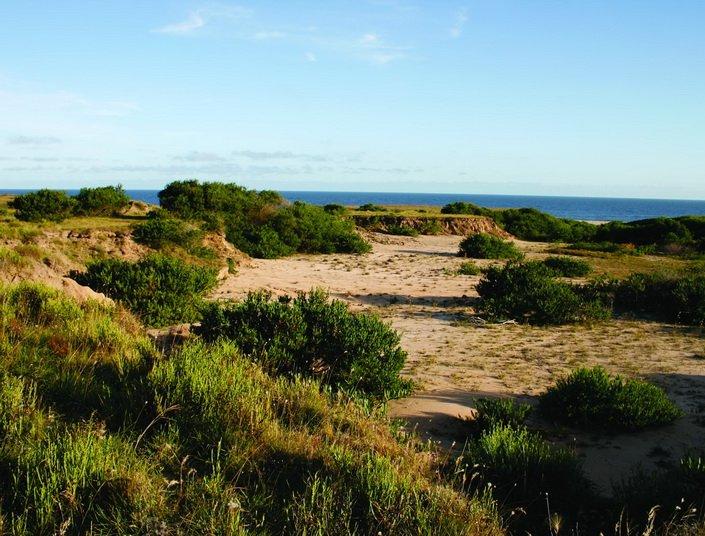 Coast-Rocha