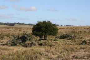 5650-Land-Garzon-Area4