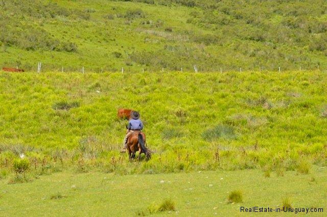 5791-Cattle-Farm-by-Zapican-Gaucho