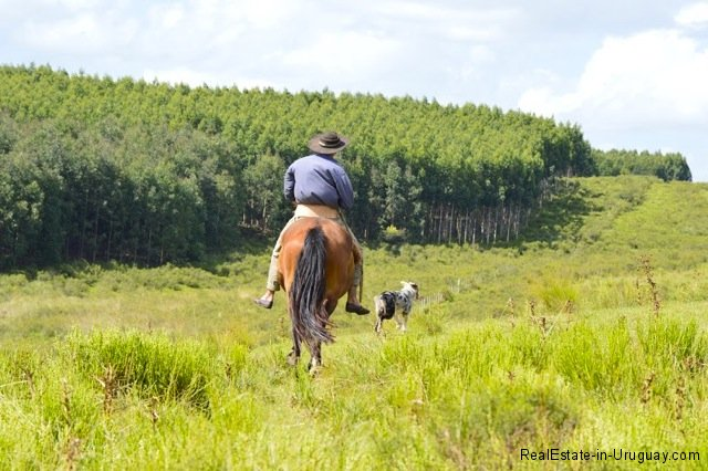 5791-Cattle-Farm-by-Zapican-Gaucho2