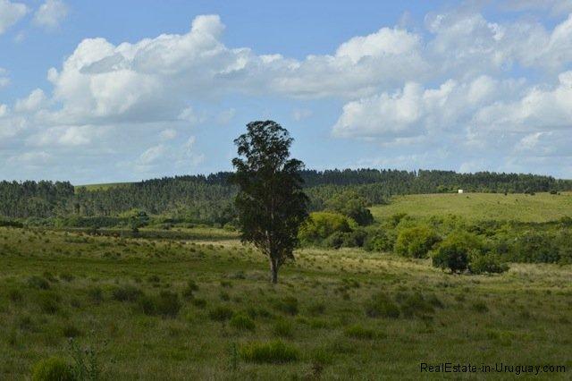 5791-Cattle-Farm-by-Zapican-Tree