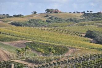 Vineyard Bodega Garzon Uruguay