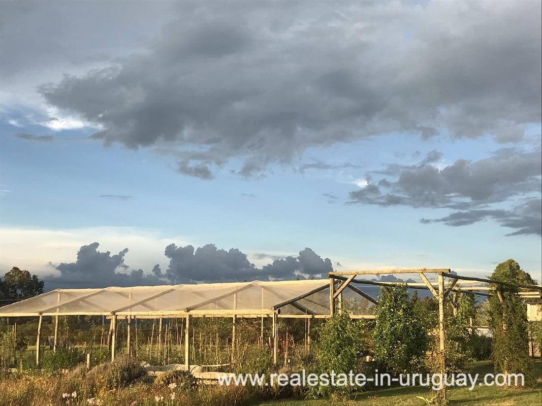 Vegetable Garden of Modern Sustainable Bio Chacra in Pueblo Eden New Built