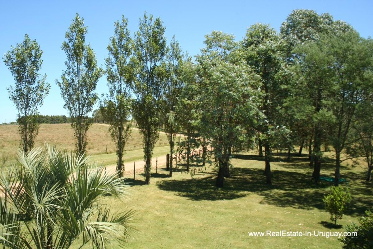 Trees of Charming-Farm-between-Ruta-104-and-Santa-Monica-Entrance