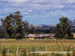 Olive Trees of Farm with 95 Hectares just 15 Minutes from Jose Ignacio