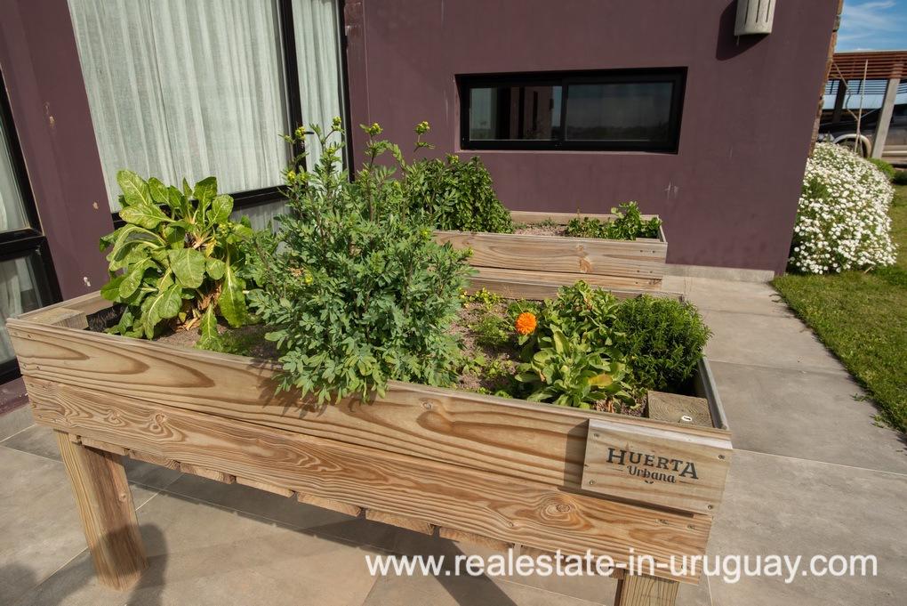 Vegetable Garden of Pueblo Mio by La Barra Golf