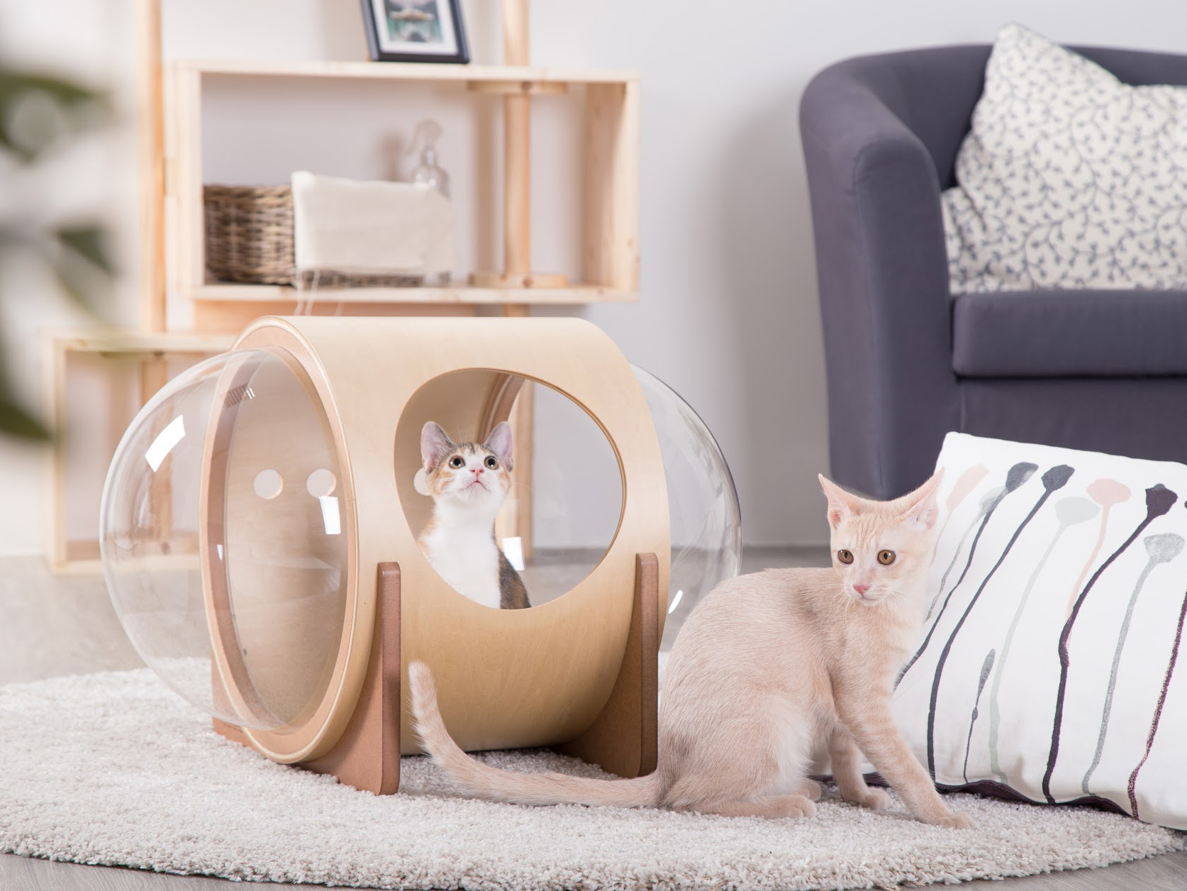 Myzoo S Out Of This World Spaceship Inspired Cat Beds