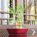 Can you use Feng Shui to Sell your Home?