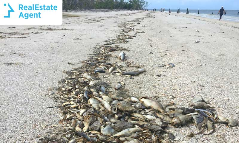 The Red Tide Effects on Real Estate